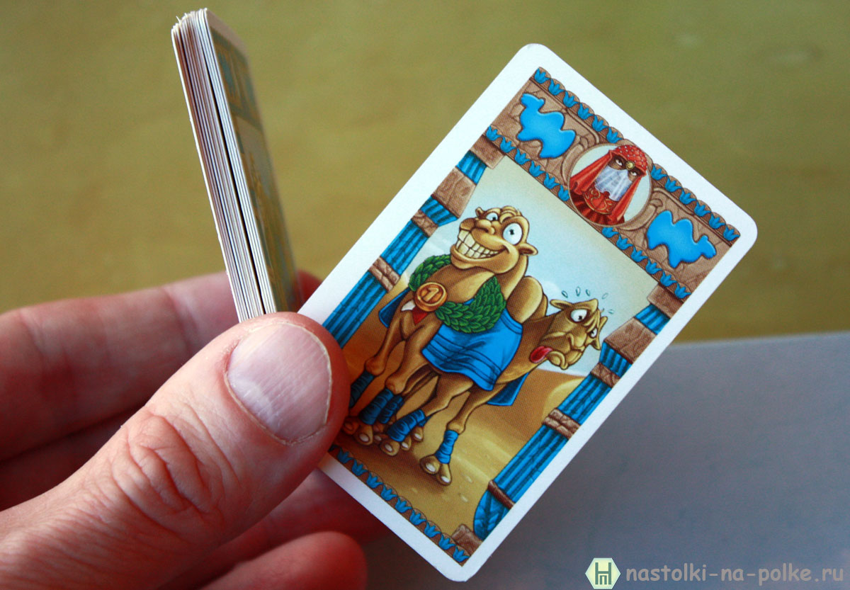 Настольная игра По Верблюдам Camel Up